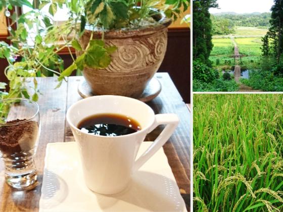 坪沼産のお米で作られた体に優しい『お米の珈琲』をお届けしたい