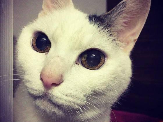 病気・高齢の犬猫が今を生き、新しい家族と出会う場所を守りたい