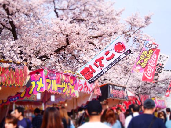 河津桜まつりで無農薬野菜と無添加味噌の飲食店をやりたい!