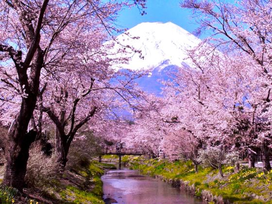 『山に向かって川が流れる忍野村』PR動画を皆さんと作りたい!
