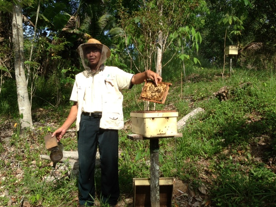 ボルネオ産ワイルドハニーがマレーシア、サバ州の貧困を救う!