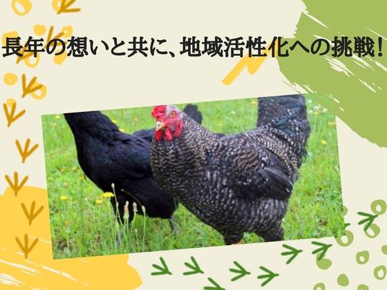 神奈川県で初めて開発に成功した「かながわ鶏」を普及させたい!