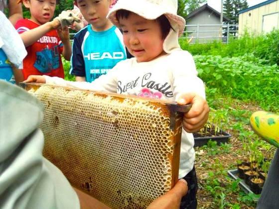 北海道の蜜蜂とハーブのガーデンに休憩所やトイレを設置したい!