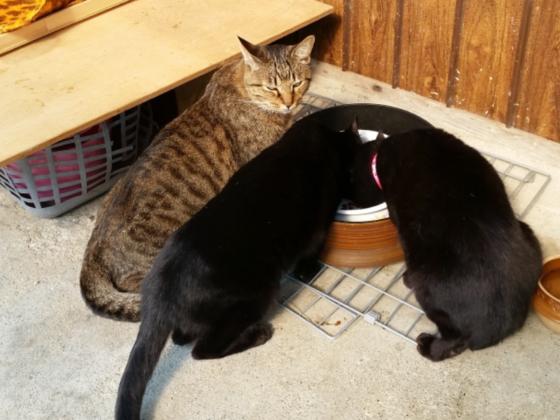 保護猫30匹の命を、そして空腹と寒さから守ってあげたい。