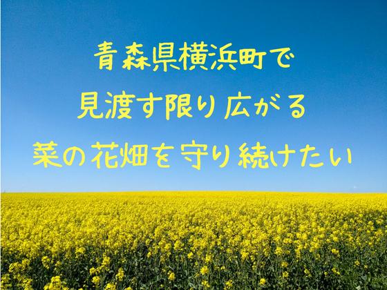 青森県に咲き乱れる菜の花畑。みんなの手で守り続けていきたい