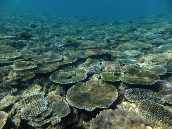 貴重なサンゴ、生き物が生息する沖縄の海を映像で伝えたい!