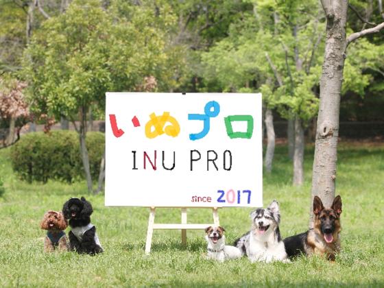 犬の正しい情報発信と共有をし、犬と人の未来をより良くしたい!