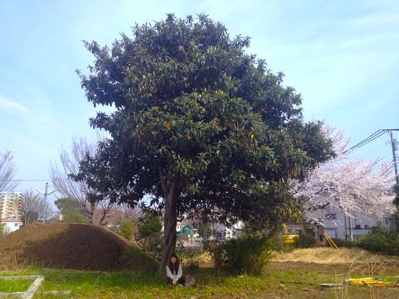 マンション建設で伐採予定の枇杷の樹を移植し命を未来に繋げたい