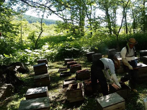 曾祖父から続いてきた養蜂を伝える蜂蜜パッケージを作りたい