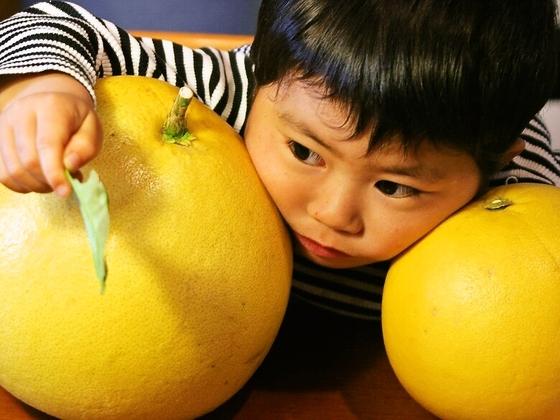 みかんの絵本を作製し、美味しい国産柑橘を食育に活かしたい!