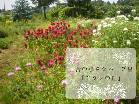 福井のハーブ畠「アウラの丘」からハーブの魅力を全国に届けたい