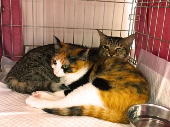 トレーラーハウスで、熊本初の保護犬猫の譲渡センターを!