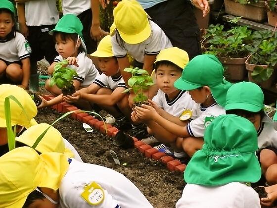 ハーブを植えて・育てて・収穫して考える、子供の食育活動!