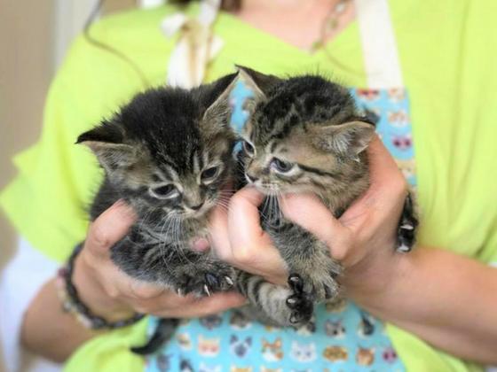 モノとして扱われた命を救う!保護猫カフェ×音楽の新たな挑戦!