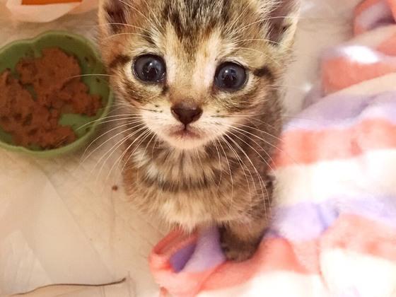 殺処分ワースト2位。愛媛県の命に期限がついた犬猫を救いたい。