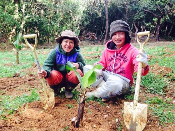 人口100人の宝島に、無農薬バナナ栽培の手伝いに行きたい!
