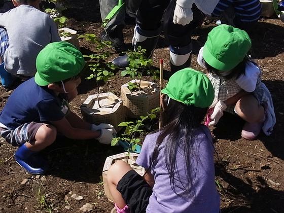 子供達と一緒に1万本の木を植え、守り育てる大切さを伝えたい!
