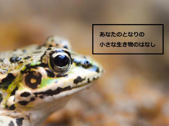 身近な自然を守るため、その魅力をYouTubeで発信したい!