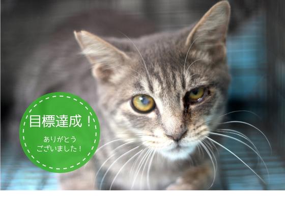 さくらねこTNR活動で大阪 梅田を世界一猫に優しい歓楽街に!
