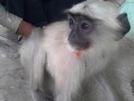 学生最後の夏、インドの動物を救いたい!