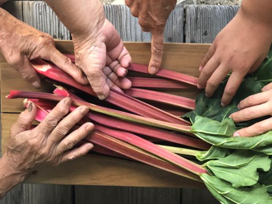 おばあちゃん達の夢を繋ぐ、広島県吉和地域のルバーブの新商品!