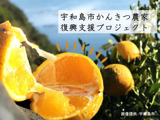 農業関係の被害総額150億円 愛媛県宇和島市の柑橘農家にご支援を