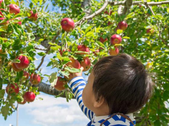りんごの町・弘前から、作り手を感じる『美味しい』を伝えたい!