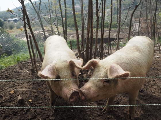 鈴木農園の焼失小屋を再建する応援プロジェクト
