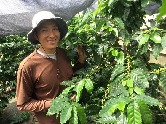沖縄県の大宜味村でコーヒーを栽培し将来の特産品にしたい!
