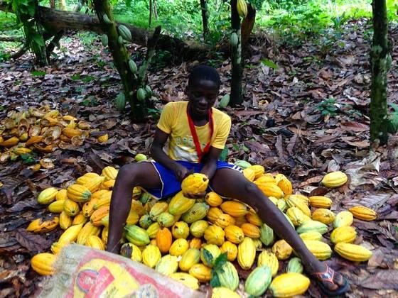この夏、ガーナ現地まで赴き、皆様にチョコレートを届けます!!