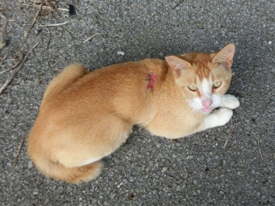 【第4弾】石垣島の捨てられた猫たちに治療を受けさせたい