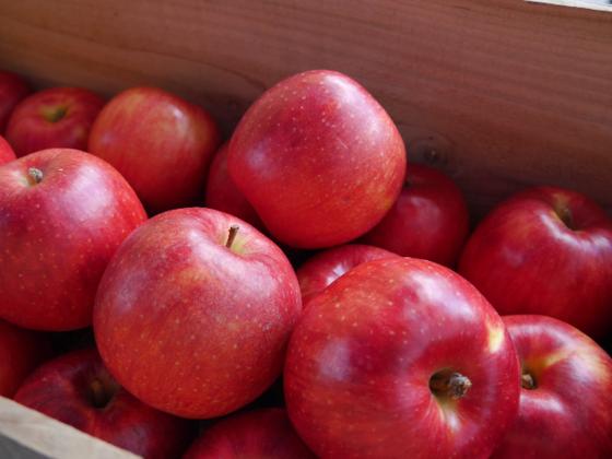 フルーツのまち南部町で『ききリンゴ世界大会』を開催