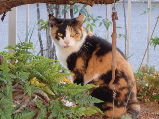 猫たちが安心して暮らしながら里親探しができる環境を整えたい