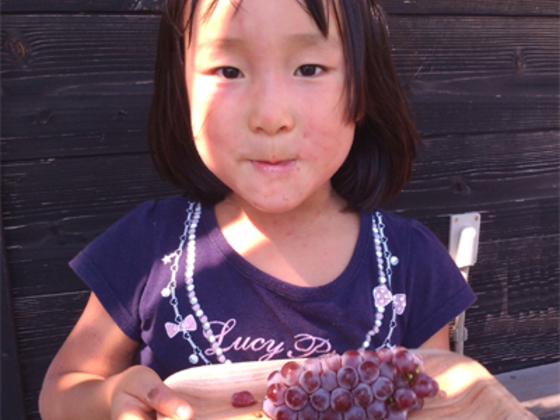 間伐材を使った食器「かまくら和器」で鎌倉の里山を守りたい