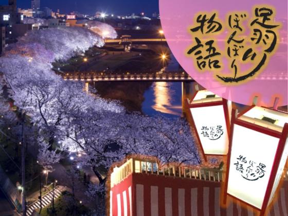 【足羽川ぼんぼり】福井の美しい桜並木にこれからも希望の灯りを