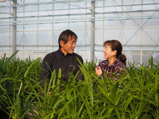 【西日本豪雨】自慢のシンビジウム。花農家としての復活を!!