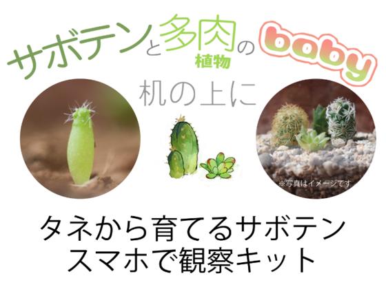 【サボテンを種から育てる!】観察キット!【サボテンの産毛】