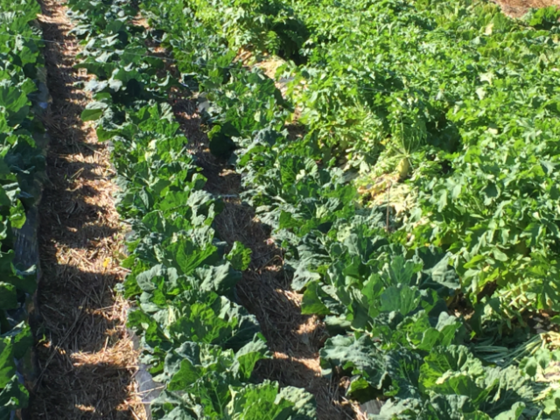 シルバー層のパワーで耕作放棄地を使い奇跡の野菜作り!