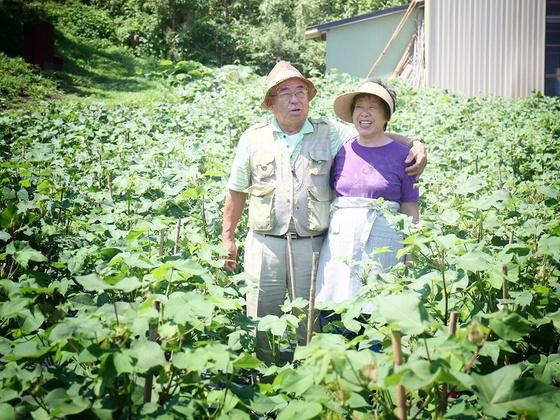 津波被害にあった農地・被災地耕作放棄地を綿畑にしたい!