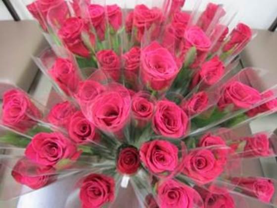 病気や要介護の高齢者に情熱と感謝を込めて赤いバラ千本を贈りたい