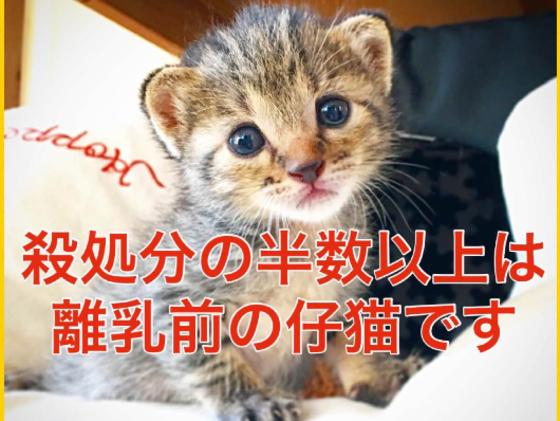 殺処分対象の子猫を救う保護猫サロンを作りたい