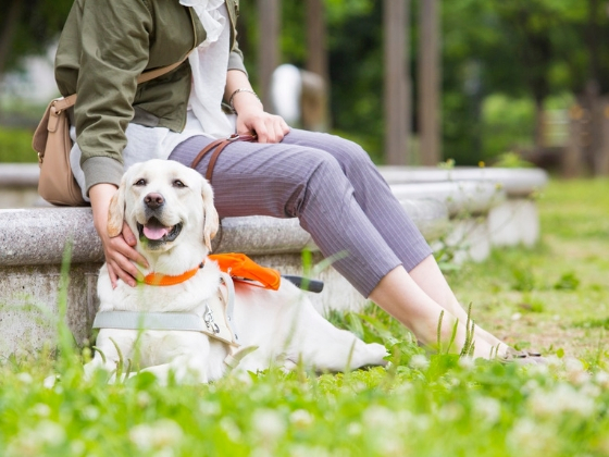 """盲導犬ユーザー約1,000人を支える""""声かけ""""の力を広げたい!"""