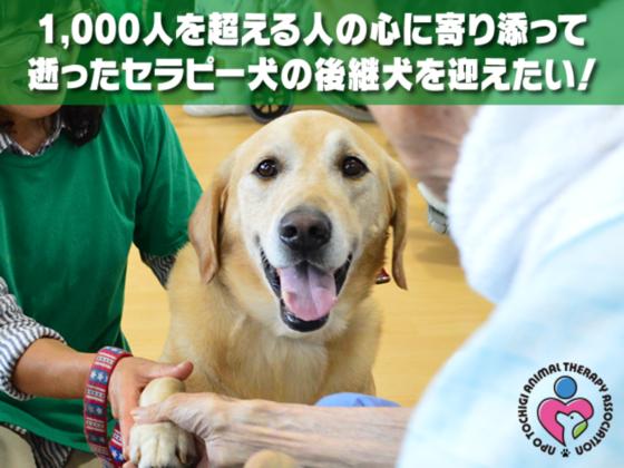 1,000人の心に寄り添ったセラピー犬の後継犬を迎えたい!