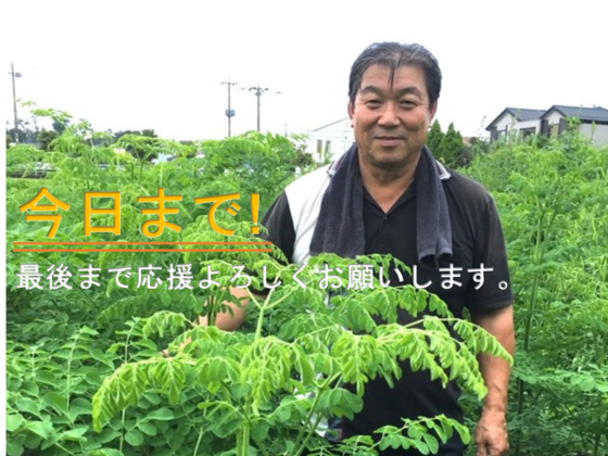 奇跡の木モリンガで忌避剤の役割を担い、自然由来でつくる農業を