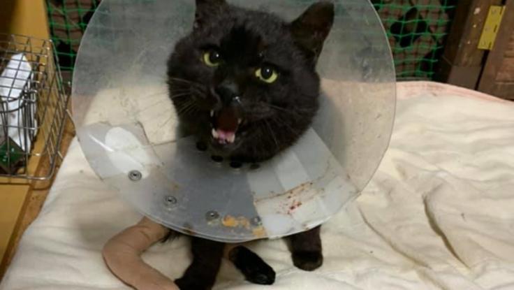 怪我や病気と闘う野良猫太朗さんを救いたい