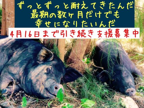 ボロボロになるまで働かされる家畜たちに「最初で最期の幸せを」