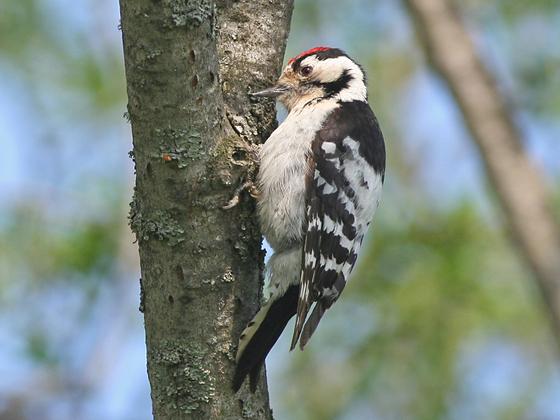 野鳥マップ作成を通じて北海道帯広市の野生生物と森林を守る!