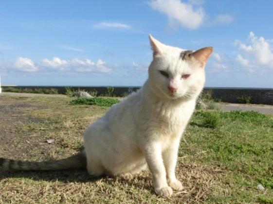 第5弾石垣島の捨てられた猫たちに治療を受けさせたい