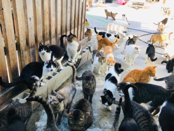 保護猫数310匹「シャディ保護猫ハウス」からのHELP!