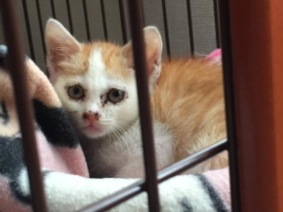 殺処分ゼロへ、丹波篠山で保護猫カフェをオープンしたい。